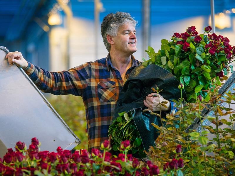 Fransen Roses Kom in de Kas